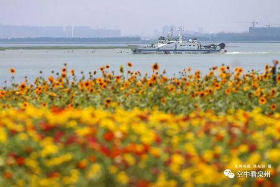 花儿盛开在泉州湾畔外面船来船往