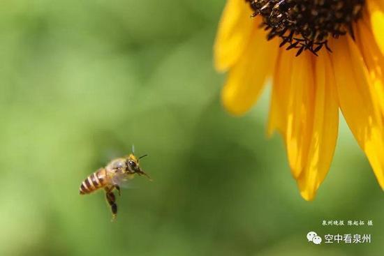 你若盛开蝴蝶自来招蜂引蝶是花儿的天性赏蜜蜂也是赏花的意趣之一
